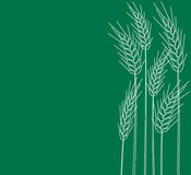 Kegel des Weizens Lizenzfreie Stockfotos
