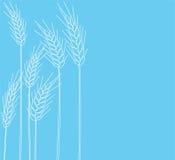 Kegel des Weizens Stockfoto