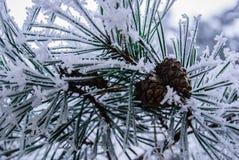 Kegel im Schnee Stockbild