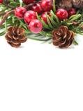 Kegel-und Beere Weihnachtsrand Lizenzfreie Stockbilder