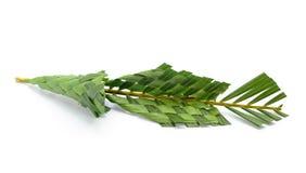 Kegel van kokospalmen op witte achtergrond wordt gemaakt die royalty-vrije stock afbeelding