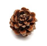 Kegel van Steenpijnboom, Pinus pinea stock afbeeldingen