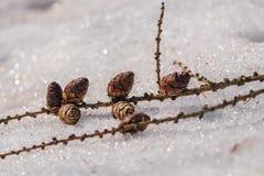Kegels op het sneeuwclose-up in het park royalty-vrije stock fotografie
