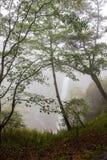 Kegon понижается в туман, национальный парк Nikko около города Nikko, Tochigi Японии Стоковое Фото