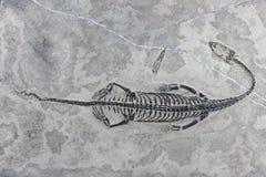 Keichousaurus hui 06 lizenzfreie stockfotografie