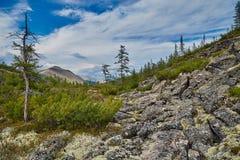 Keienhelling van berg Een taiga in de zomer Een stroomvallei royalty-vrije stock fotografie