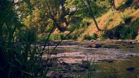 Keila Rzeczny spływanie między skałami w lesie park narodowy, część 3 5 zbiory wideo