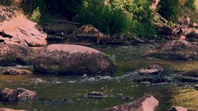 Keilarivier die tussen rotsen in het bos van Nationaal Park, een deel 2 stromen van 5 stock video