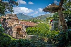 Keilschwanzsittich in den Kolonialklosterruinen mit Bergen Lizenzfreies Stockbild