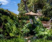 Keilschwanzsittich in einem grünen Garten Lizenzfreies Stockfoto
