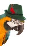 Keilschwanzsittichpapagei, der einen bayerischen Hut trägt stockbild