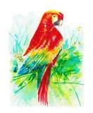 Keilschwanzsittichvogel-Wasserfarbfarbenzusammenfassungshintergrund Lizenzfreie Stockbilder