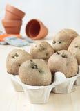 Keimen Sie Kartoffeln im Eikarton, um zu pflanzen Stockfotografie