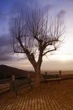 Kein Führungsbaum mit zwei Bänke auf einem Sonnenuntergang Stockbild