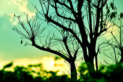 Keine Blätter Stockfotos