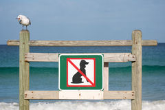 Keine Hunde lizenzfreies stockfoto