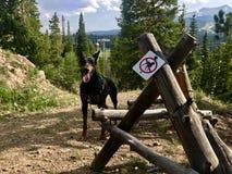 Keine Hunde Stockfotografie