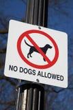 Keine Hunde gewährten Lizenzfreie Stockfotos