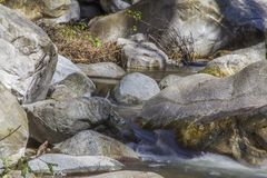 Keirotsen in Santa Anita Canyon Stock Fotografie