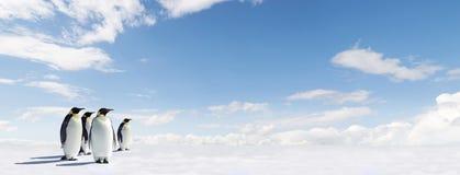 kejsareispingvin Royaltyfri Fotografi