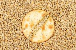 Keks und Weizen Lizenzfreies Stockfoto
