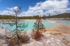 Keksbecken Yellowstone Nationalpark Stockfotos
