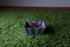Kekse auf einer Platte Lizenzfreies Stockfoto