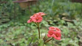 Kektas kwiat zdjęcie royalty free