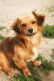 Kelig gullig hund Arkivbilder