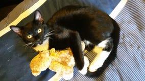 kelig kattunge Arkivbild