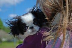 kelig liten hundvalp Royaltyfria Bilder