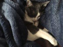 Keligt sova för katt royaltyfria foton
