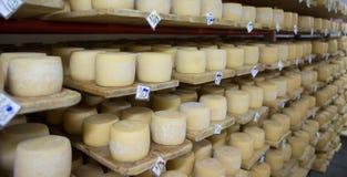 Keller des Schweizer Käses stockbilder