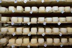 Keller des Schweizer Käses Stockbild