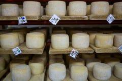 Keller des Schweizer Käses Stockfotografie