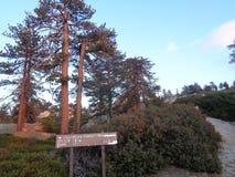 Keller szczytu Drogowe sosny przy półmrokiem 2 zdjęcia stock