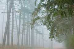 Kellogg Forest in Fog Stock Photo