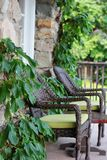 Green vines surround a patio seating area on the deck near Lake Chelan in Washington State stock images
