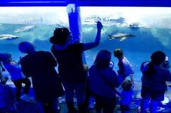 Kelly Tarltons morza świat obrazy stock