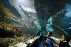 Kelly Tarltons morza świat Zdjęcie Royalty Free
