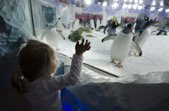 Kelly Tarltons Sea World. AUCKLAND, NZ - APRIL 26: Little girl interact with Gentoo Penguins in Kelly Tarltons sea world on April 26 2013. It's the world's Royalty Free Stock Photography