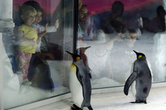 Kelly Tarltons Sea World. AUCKLAND, NZ - APRIL 26:People interact with King Penguins in Kelly Tarltons sea world on April 26 2013.It's the world's largest Royalty Free Stock Image