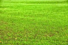 Kelly zieleni gazon folujący ramowy tło Zdjęcie Stock
