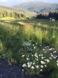 Kelowna, BC- Beautiful British Columbia- Tourism royalty free stock photos