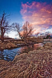 Kelowna, BC Winter Sunset. An image at  Mill Creek in Downtown Kelowna at Sunset with dead vegetation, but no snow Royalty Free Stock Photography