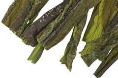 Kelp imagem de stock