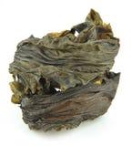 Kelp lizenzfreies stockfoto