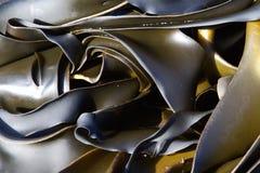 Kelp Lizenzfreies Stockbild