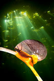 Kelp bed and snail Stock Image