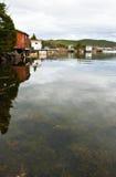 kelp czerwień Obraz Royalty Free